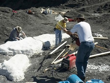 Добыча аммолитов возле реки Св. Марии в Канаде