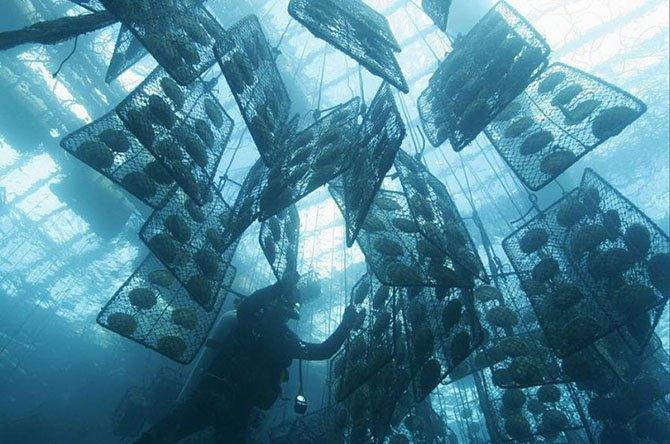 Выращивание моллюсков