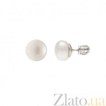 Серьги гвоздики серебряные с белым жемчугом AQA--80012Б