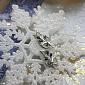 Золотые серьги с бриллиантами и сапфирами Диля 000021777
