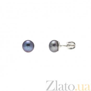 Серебряные пусеты на закрутках с жемчугом  AQA--80012Ч