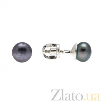 Серебряные серьги-пуссеты с черным жемчугом Нежность 2093р черн ж