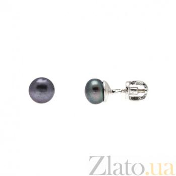 Серьги гвоздики из серебра с черным жемчугом Лорэн 000027103