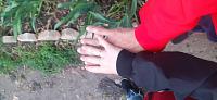Обручальное кольцо из красного золота 000103671